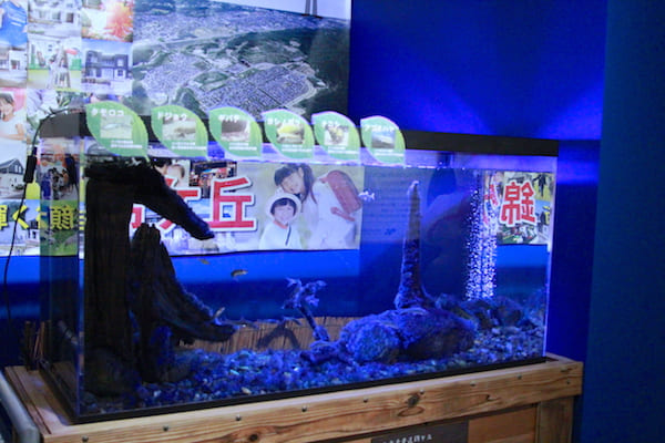 錦ヶ丘周辺に生息している魚たちの画像