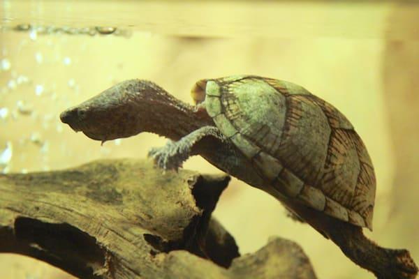 アクアテラス錦ヶ丘のカメの画像