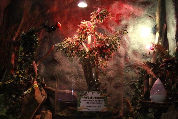 アクアテラス錦ヶ丘のカメレオンの画像