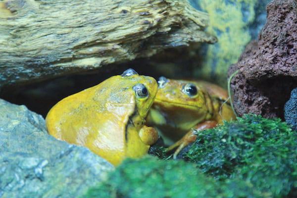 アクアテラス錦ヶ丘のカエルの画像