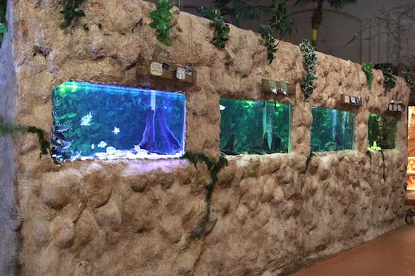 アクアテラス錦ヶ丘のインスタ映え水槽
