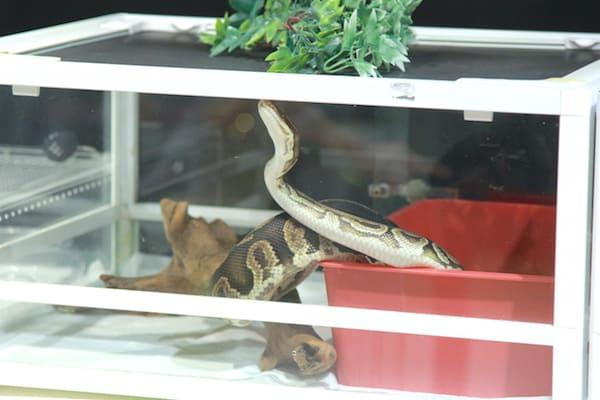 アクアテラス錦ヶ丘のヘビの画像