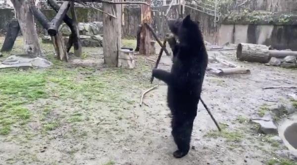 八木山動物公園のクマの画像