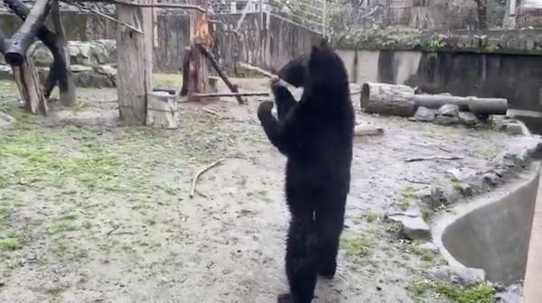 八木山動物園の熊の画像