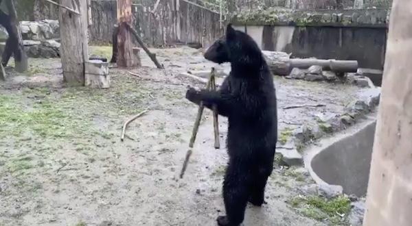 八木山動物園のつばさの画像