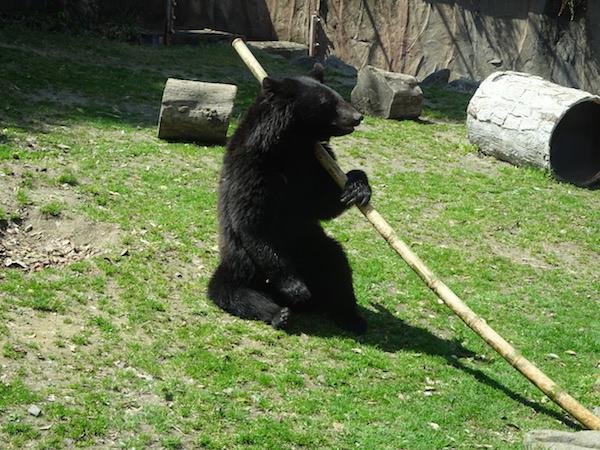 八木山動物公園フジサキの杜のクマの画像